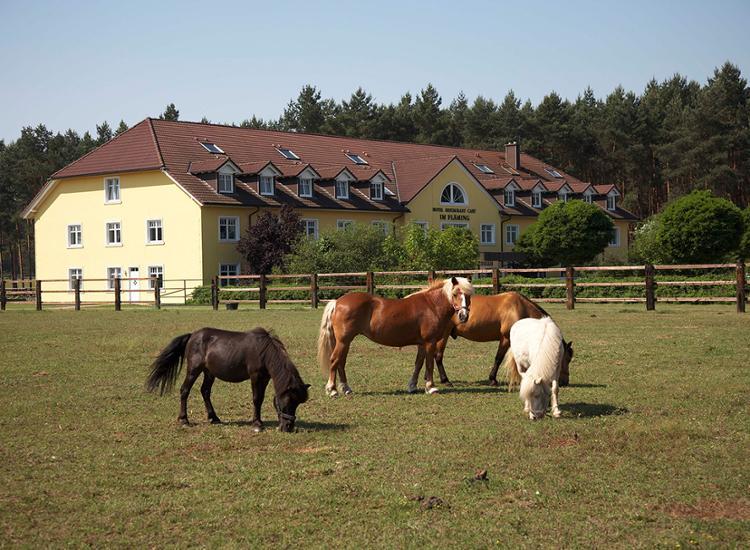 Landhotel Im Flaeming Pferde vor dem Haus