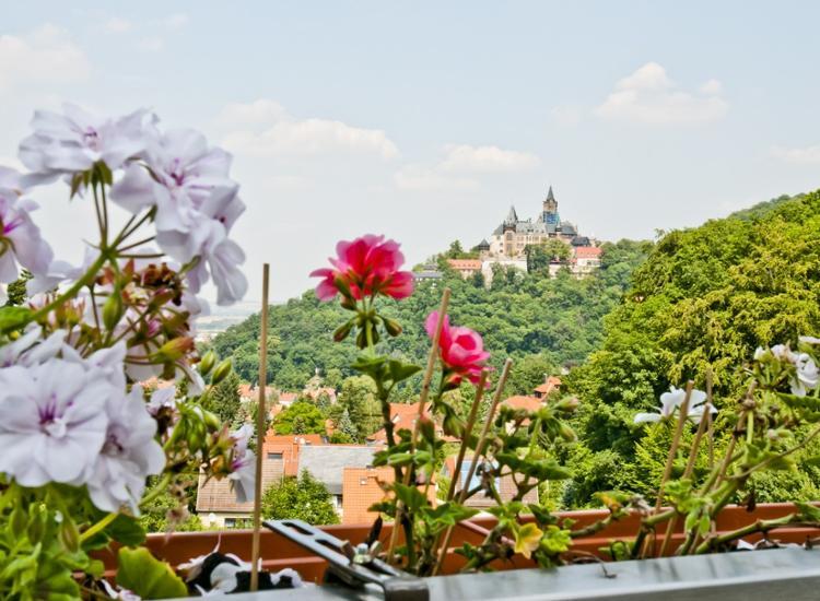Hotel u Restaurant Schanzenhaus Wernigerode Aussicht