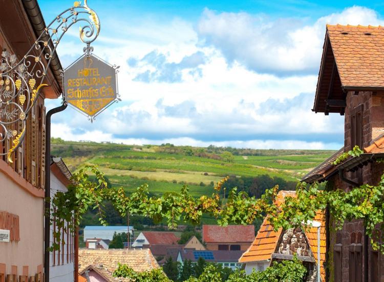 Kulinarischer Genuss in der Pfalz - Erholung & Wellness an der Weinstraße