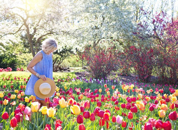 Blumenpracht auf der Bundesgartenschau