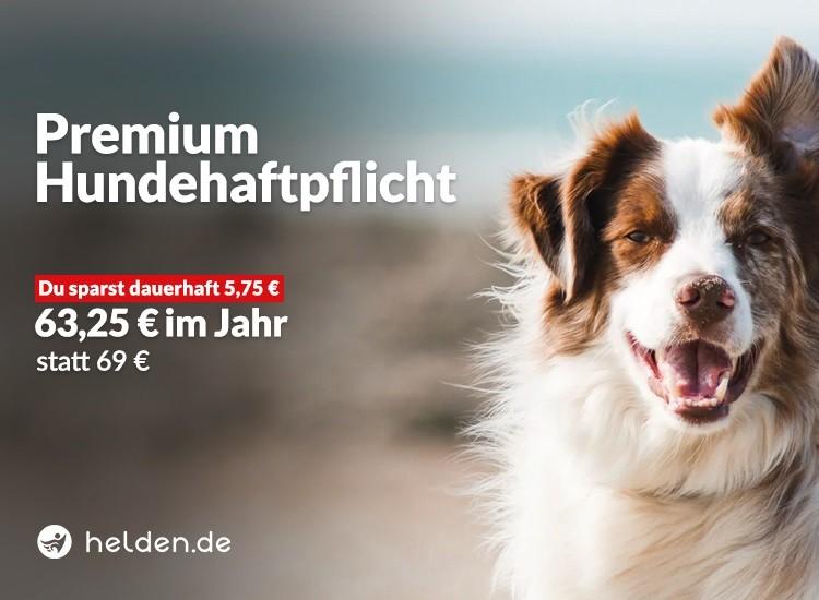 Rabatt für Hundehaftpflichtversicherung